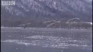Горещи полета в Япония - Таината природа в Япония - Би Би Си
