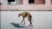 Историята на Luna- кучето, преминало през глад и изпитания, за да намери грижовно семейство