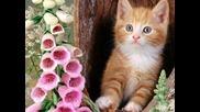 Коте Мило - детска песничка