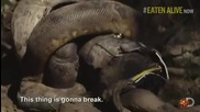 Изяден жив от анаконда