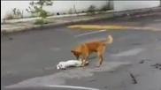 Куче се опитва да издърпа своя приятел от улицата