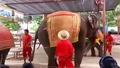 Танцуващи слонове - шоу
