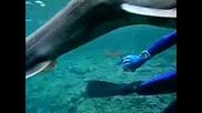 Праисторическата Акула В Япония
