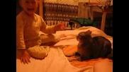 Коте отвръща на удара - Смях