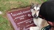 Трогателно! Куче тъгува на гроба на свой близък