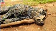 Помагане на куче паднало в горещ катран