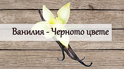 Ванилия - Черното цвете