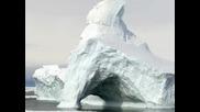 Life Of Antarctica