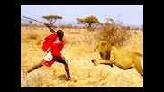 Man vs Lions. Maasai Men Stealing Lion's Food Without a Fight.