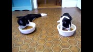 Пияни котки се опитват да ядат