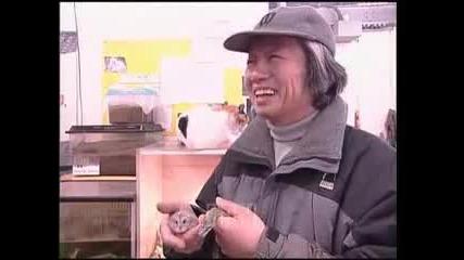 snake befriend its hamster lunch in zoo - zaparwi pat wizjdam zmiq da e fr s mishka ...