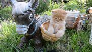 Сладкото коте Томас