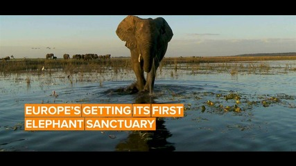 The EU's first elephant sanctuary will be in France