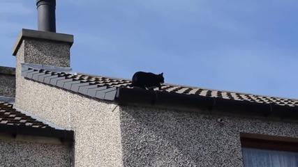 Котка се катери като нинджа