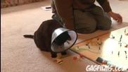 Cat plays Risk (sheeba Ep. 1)