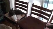 Коте се маскира като заек