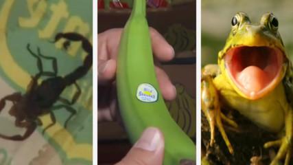 Топ 5 Гадни неща откривани в храни
