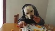 Да нахраниш кучето си по супер забавен начин ..
