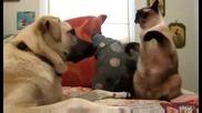 Котка Боксьор бие Нагло Куче в Муцуната!