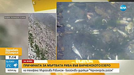 Каква е причината за мъртвата риба във Варненското езеро?