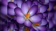 Настроение в лилаво