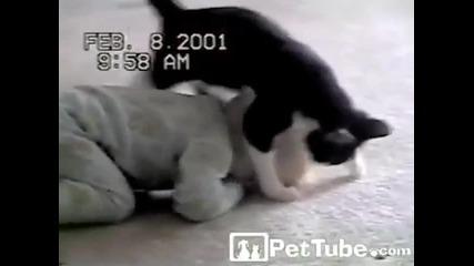 Бебе и котка... Неочаквано добра комбинация!