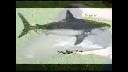 Мегалодон - Най - Голямата Акула