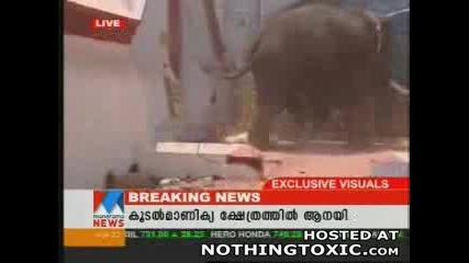 Убиство На Слон