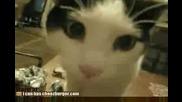 разговор между котка и неговата стопанка!!!