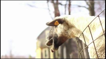 Justin Goatber [ im scared Q_q]
