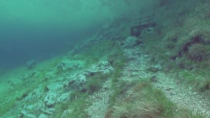 Подводен живот