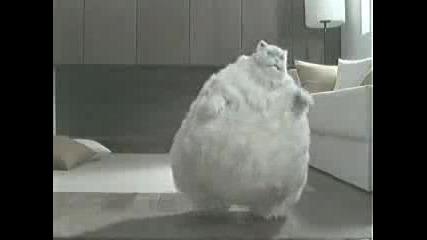 Котка Се Опитва Да Отслабне
