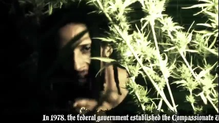 Julian Marley - Boom Draw (official video)
