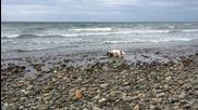 Куче спаси малко делфинче на плаж в Уелс