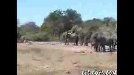 Слонска Любов