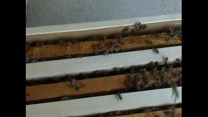 Пчелен Рой на терасата