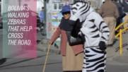 Костюмирани зебри спасяват животи в Боливия