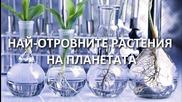 Най-опасните растения на планетата