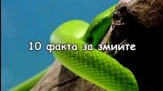 10 факта за змиите