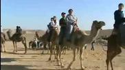 твърде дебела дори и за камила ..