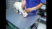 Ефективен начин да Парализираш котка