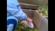 иво и зайчето