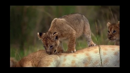 African Cats | Movie Trailer Hq