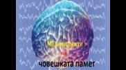 Механизмите на човешката памет