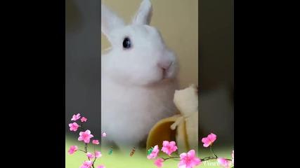 Зайче яде банан като луд