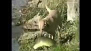 Куче Хваща Огромна Риба!