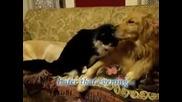 куче и котка приатели
