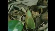 Хищно Растение - Отблизо