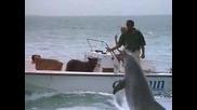 Делфините - едни невероятни животни
