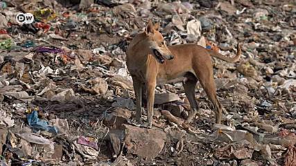 Индия изнемогва под планини от отпадъци
